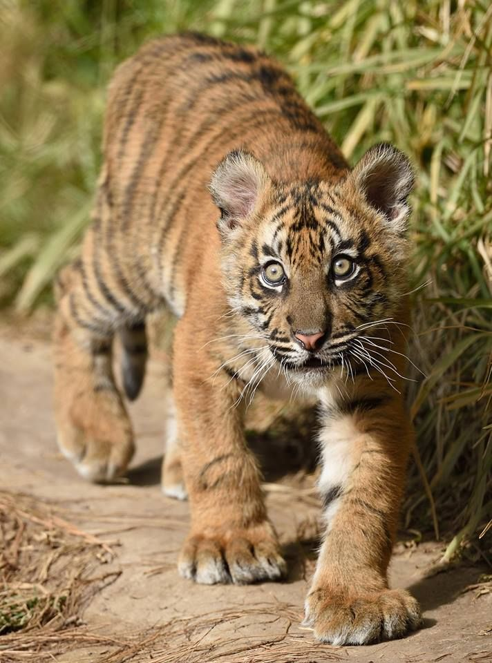 410 best images about favorite animals on pinterest for Jack ryan fine jewelry austin