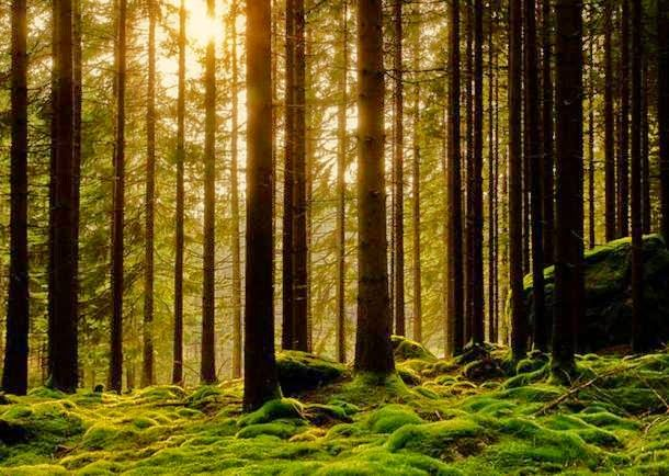 Elfdalian, The Ancient Viking Forest Language Of Sweden, Set To Be Revived