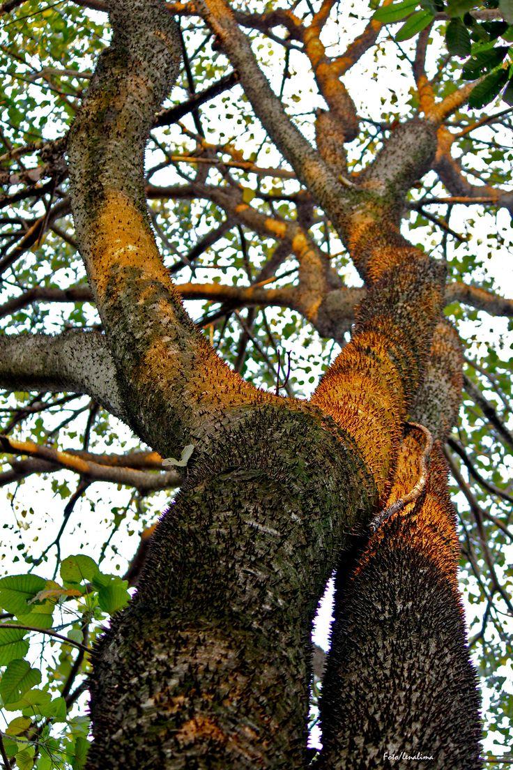 No dia 21 de setembro, é comemorado no Brasil o dia da árvore. No hemisfério sul o dia 23 de setembro marca a chegada da primavera.A árvore é de vital importância para todos seres vivos do nosso planeta. Além de reter o dióxido de carbono (CO2) em excesso, fornecem boa parte do oxigênio que utilizamos na respiração.
