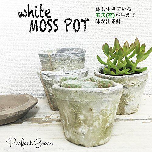 Amazon.co.jp|モスポット ホワイト3鉢 植木鉢 陶器鉢 テラコッタ鉢 素焼き鉢 鉢底穴アキ プランター おしゃれな植木鉢 mossポット|グリーン・観葉植物 通販
