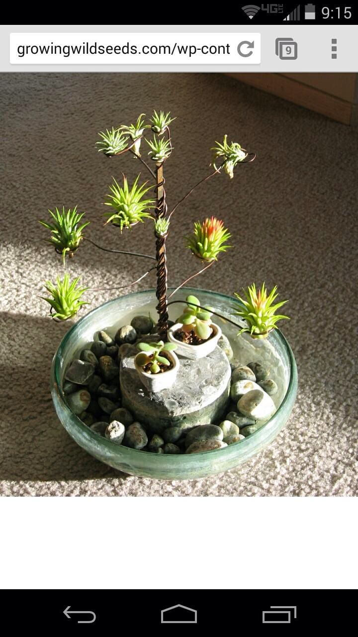 Best 25+ Air Plants Ideas On Pinterest