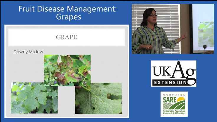 Nicole Ward Gauthier, Extension Plant Pathologist at the University of Kentucky explains grape disease management options for home gardening, including sustainable and organic management techniques.