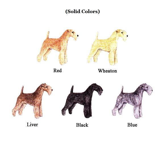 119 Best Lakeland Terrier Images On Pinterest Lakeland