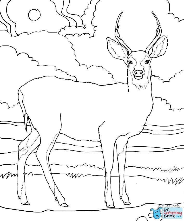 Mule Deer Coloring Page Supercoloring Coloring Pages In Mule Deer Coloring Pages Deer Coloring Pages Animal Coloring Pages Horse Coloring Pages