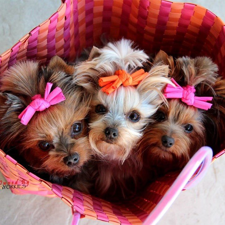 A basket of darling