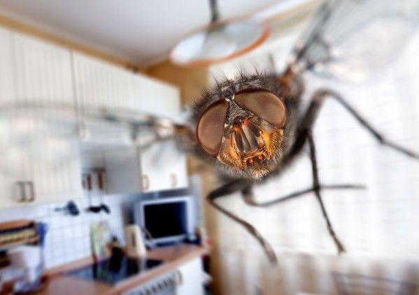 Sie Wollen Schnell Unangenehme Essensgerüche Entfernen und Lästige Fliegen Loswerden? Wir Verraten Ihnen einen Einfachen Trick