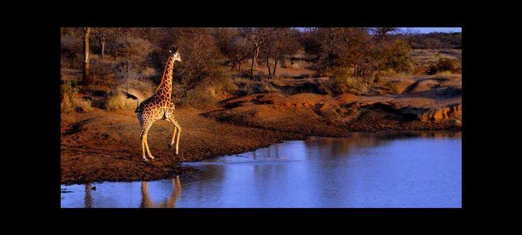 Nous prenons la route depuis Johannesburg en direction du parc national sud-africain de Mapungubwe. Ce vaste espace naturel se trouve à cheval sur les frontières de l'Afrique du Sud, du Zimbabwe et du Botswana, au confluent des