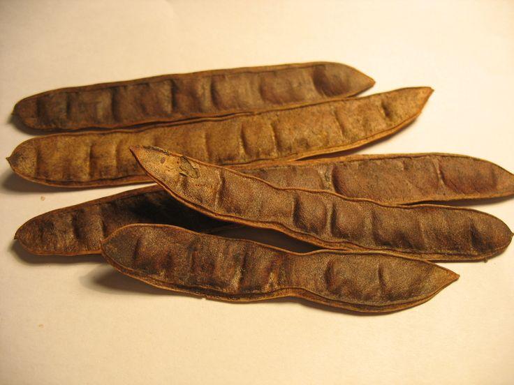 Robinia, Robinia pseudoacacia bonsai tree seeds - 10 seeds
