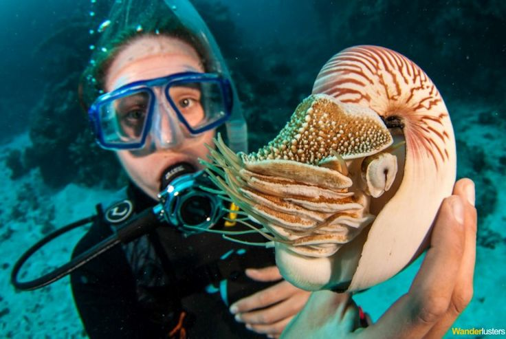 Scuba diving travel photo of Charli from http://wanderlusters.co.uk/