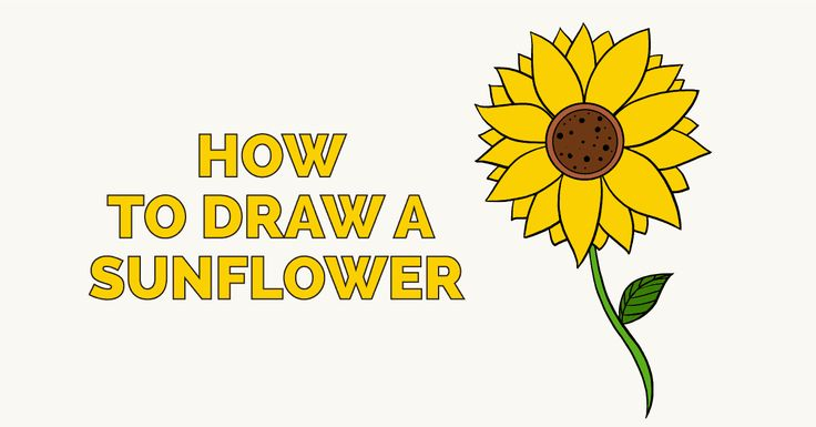 "Sunflowers are a well known sight across much of the world. Their scientific name, Helianthus, can literally be translated ""sun flower,"" from the Greek words he"