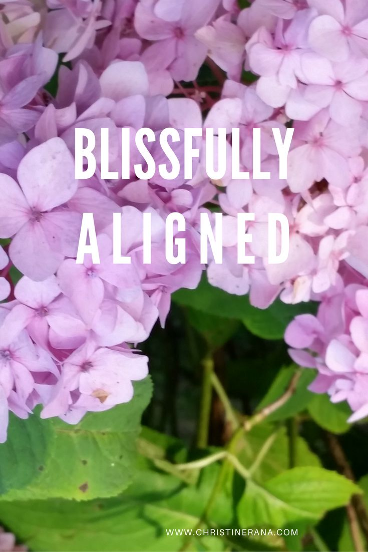 Download and use as beautiful reminder to get into alignment and enjoy the bliss.