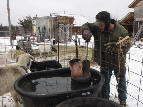 Keeping fresh water in front of our livestock in the winter has always been somewhat of a problem. A long time ago, when we lived on a homestead with electricity, we were able to keep an electric stock tank heater in our large stock tanks so that our cows and horses always had water …