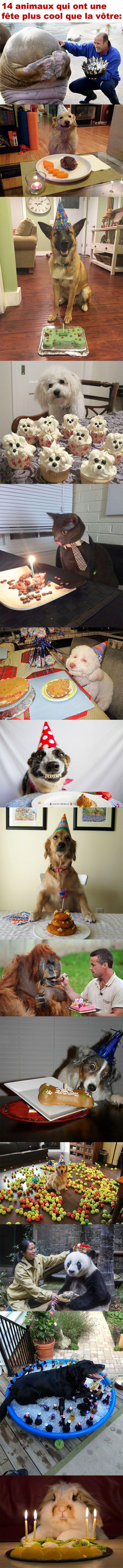 14 animaux qui ont une fête plus cool que la vôtre