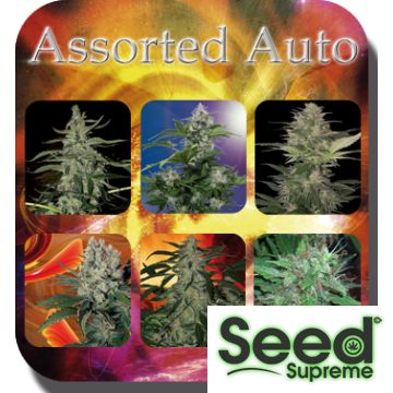 Enjoy the best varieties of Auto and #FeminizedSeeds from #BuddhaSeeds. These seeds come in a single tube without identification. Each of them is 100% #AutoFlowering and 100% feminized. You'll find the best flavors that will remind you of the biggest classics. For more details check: http://www.seedsupreme.com/assorted-auto-feminised-mix.html
