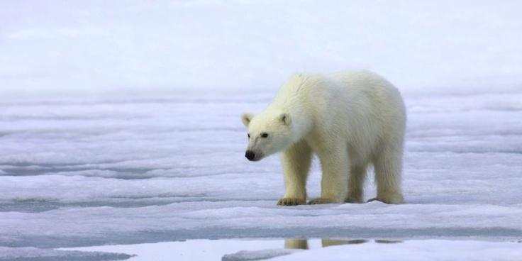 """Début mai, l'Organisation météorologique mondiale (OMM), une agence spécialisée de l'ONU, s'est alarmée de la """"fonte record des glaces de l'Arctique en août-septembre"""", dans son rapport annuel sur le climat 2012, publié à Genève."""
