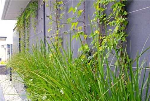VG News - Tensile Cables - Our trellises are greening well