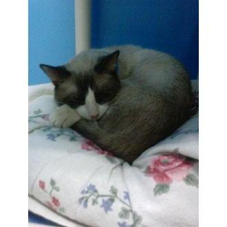 Aslan | Justin Bartlett Animal Rescue | West Palm Beach, Florida | Pets.Overstock.com