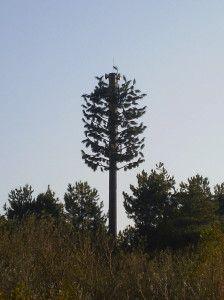 Zendmast boom Willem van Heijningen