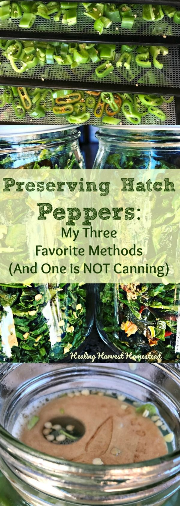 Do you have lots of peppers this harvest season? We have too many to eat! Here are my three favorite methods of preserving peppers. Find out how to preserve peppers! Food preservation is a hot thing right now!