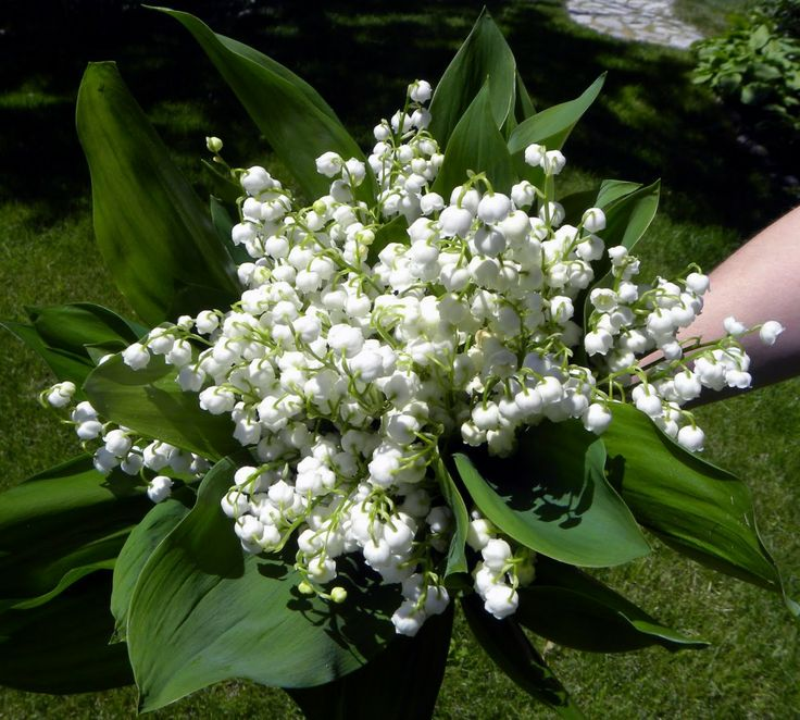 Lily Of The Valley Bouquet: Lily Of The Valley Flower Bouquet