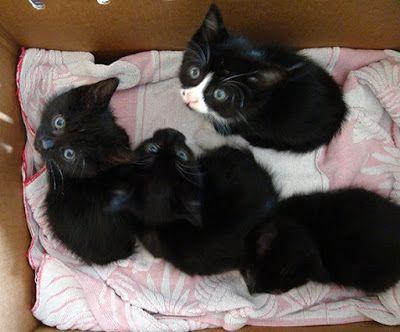 Gatitos: imágenes, informacion y cuidados: Fotografia de tiernos gatitos bebes  [20-1-17]
