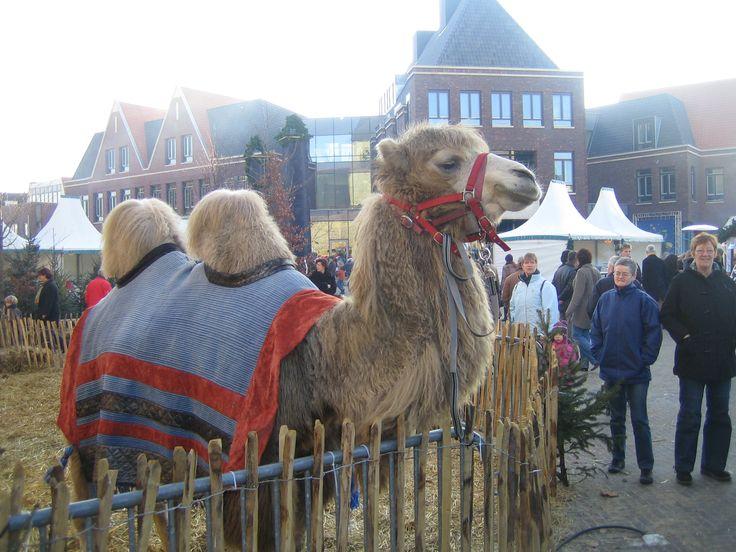 Kerstmarkt Denekamp met een prachtige kameel