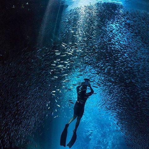 FLIPP Management | Jem Cresswell, underwater photographer in action