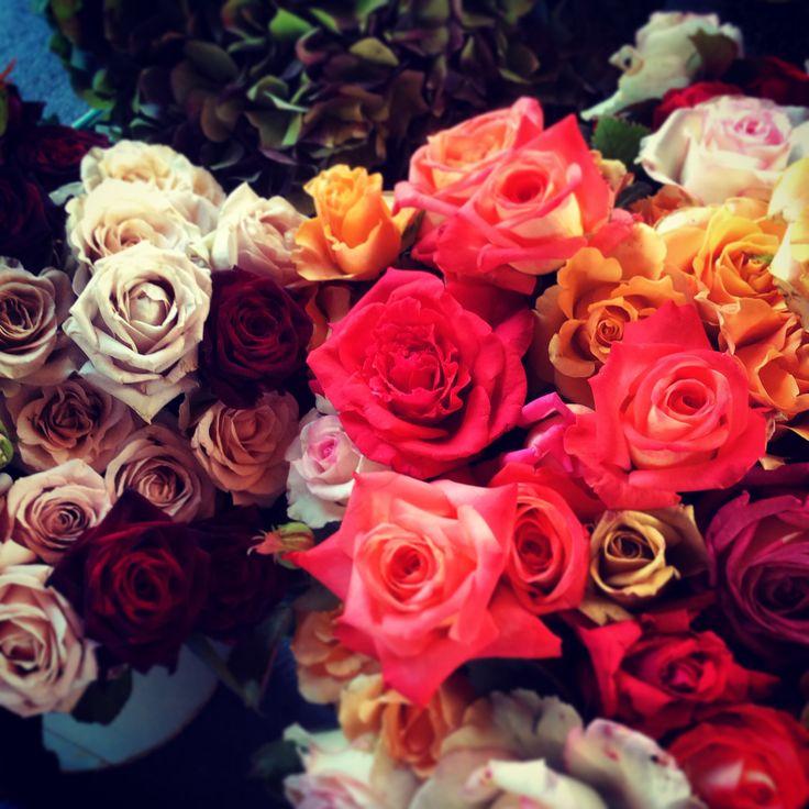 Garden roses - Flowertherapy