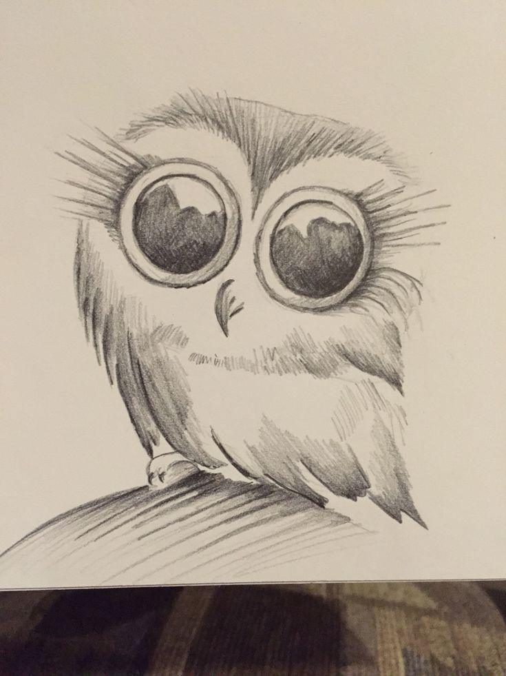 Little owl sketch · owl drawingsanimal drawingspencil drawingseasy