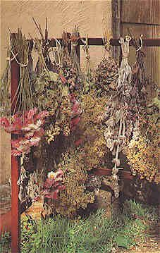 Drying Flowers |from Garden Guides....a really good resource