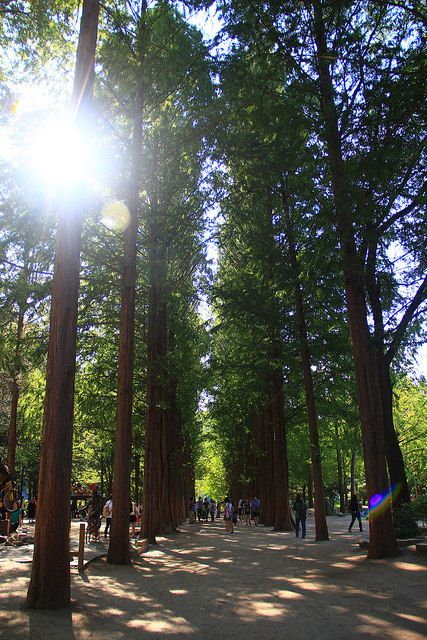 Summer in Nami Island, this place is famous for Korean drama Winter Sonata
