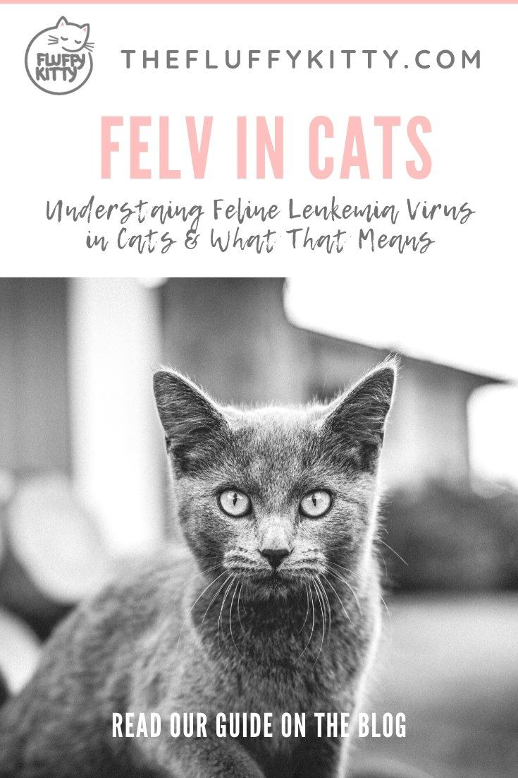 Pin On Cat Health Nutrition