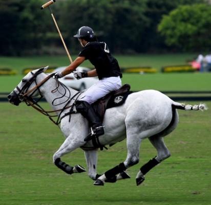 Polo (Batalla by Delfina Blaquier)