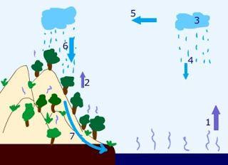 De watercyclus - invul versie