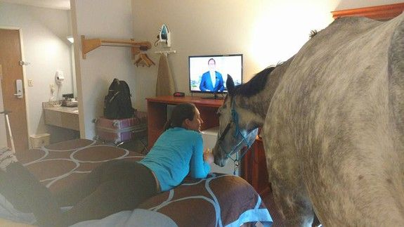 Woman tests limits of pet-friendly motel with her horse