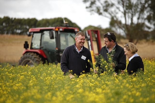 Bayer's Rob Hall and Stephen Monklet in a flowering canola field in Victoria, Australia | www.bayergoldenage.com