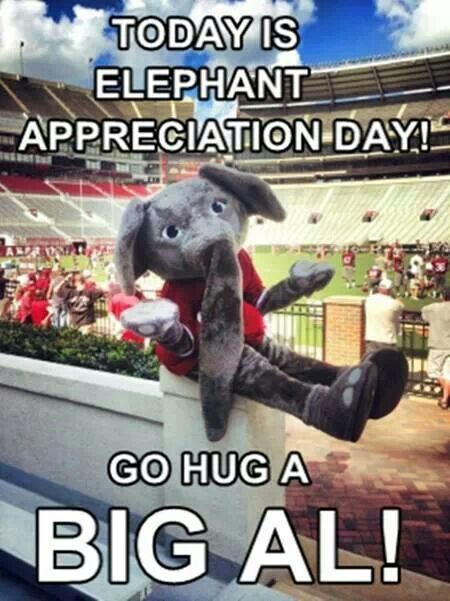 Everyday is elephant appreciation day for Alabama football fans.....Roll Tide Roll!.