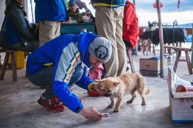 This dog has run 100 miles and shown the world what true loyalty is