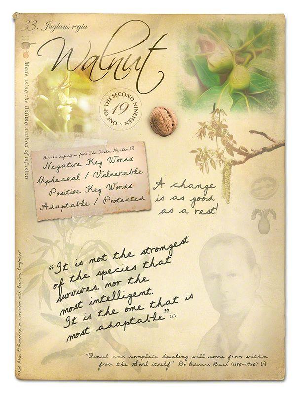 Walnut bach flower poster                                                       …