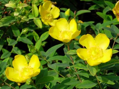 Find This Pin And More On Mellow Yellow Plants By Coblands