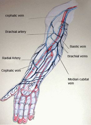 Iv Injection Sites Of The Arm вl D ѕwє T Amp Tє Rѕ Qd