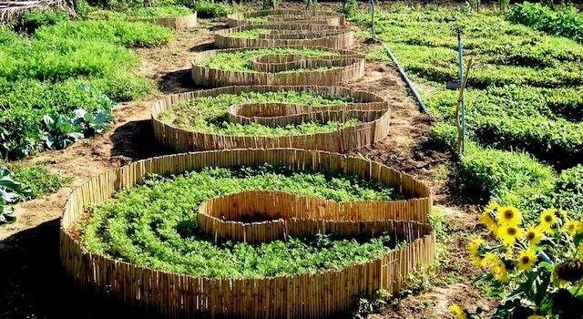 Permacultura ganha mais força no campo
