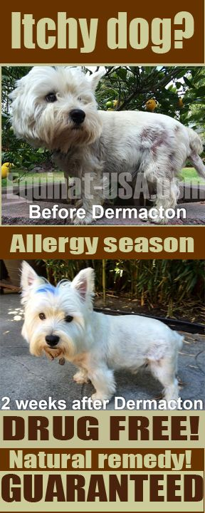 Itchy Dogs With Hair Loss And Seasonal Allergies Get Real Relief All Natural Dermacton