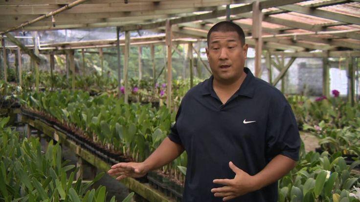 Kawamoto Orchid Nursery- PBS