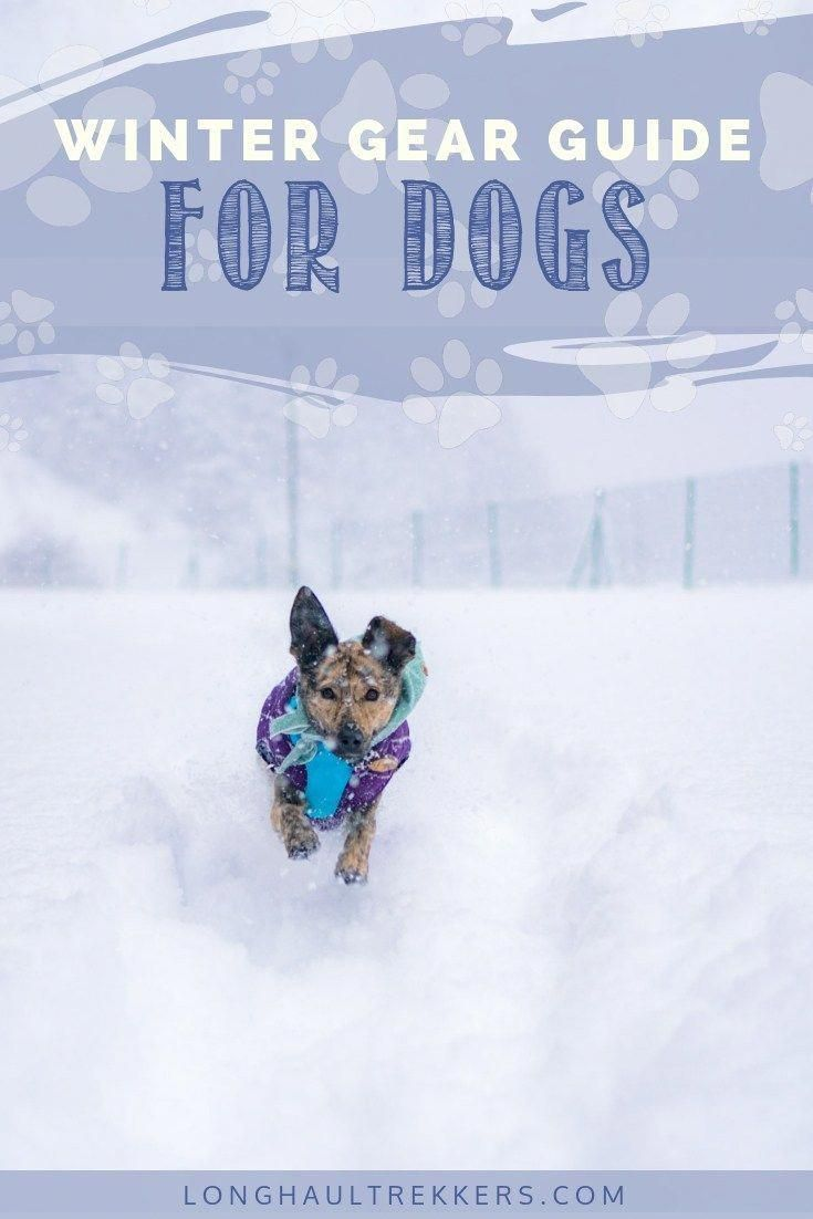 Winter Gear For Dogs To Keep You Outdoors All Year Winter Gear