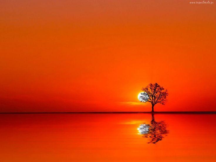 Zachód, Słońca, Jezioro, Drzewo, Odbicie