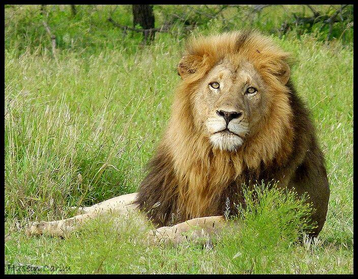 Majestic #KNP #KRUGER #SANPARKS