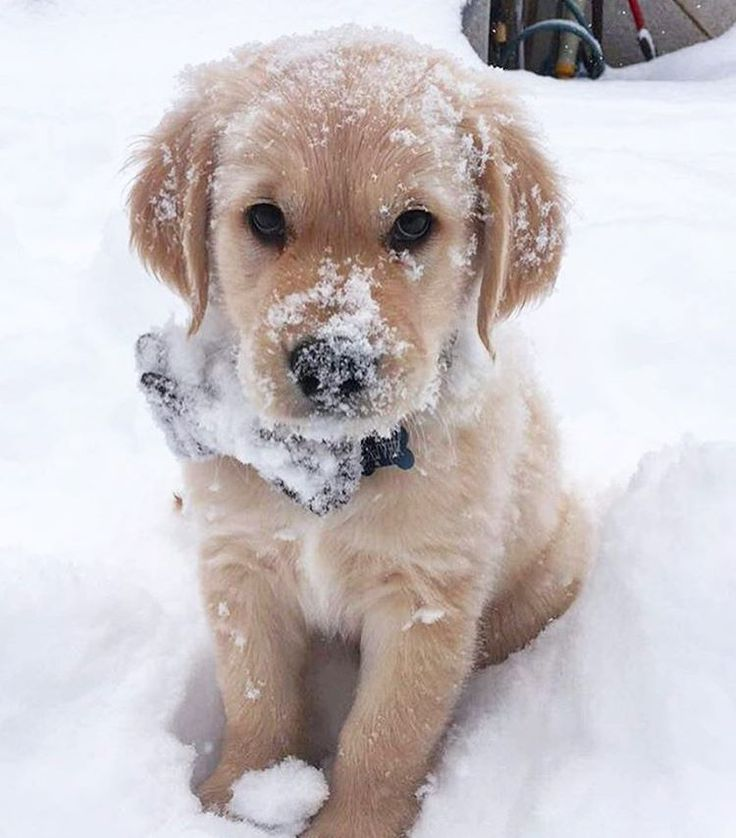 My nose is froze, and my paws is froze, and my tail is froze...