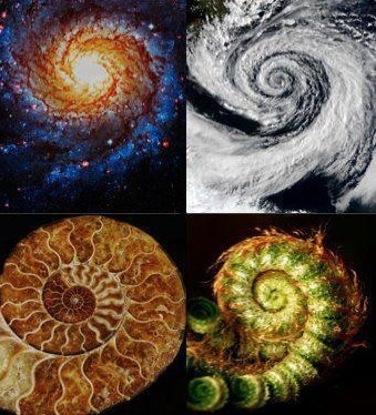 The Fibonacci Sequence.  1,1, 2, 3, 5, 8, 13, 21, 34, 55, 89,144   Fibonacci sequences appear in biological settings, in two consecutive Fibonacci numbers, such as branching in trees, arrangement of leaves on a stem, the fruitlets of a pineapple, the flowering of artichoke, an uncurling fern and the arrangement of a pine cone.