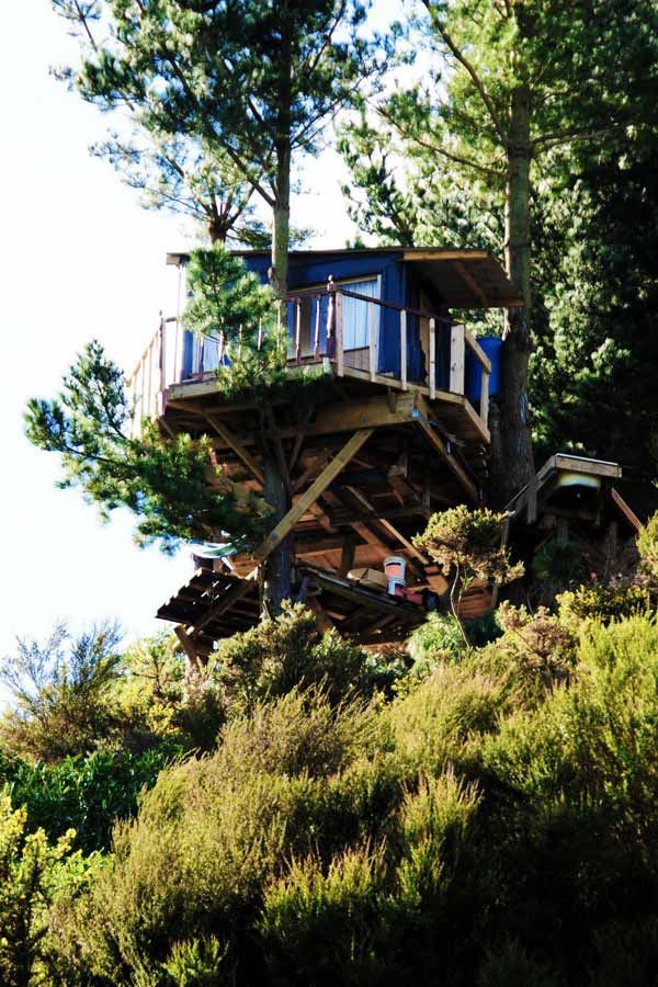 awesome!: Modern House Design, Rustic House, Green Trees, Tree Houses, Treehouse, New Zealand House, Trees House, Ultimate Trees, Cabane Danse